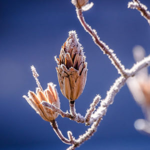 plant-frost-industry-category