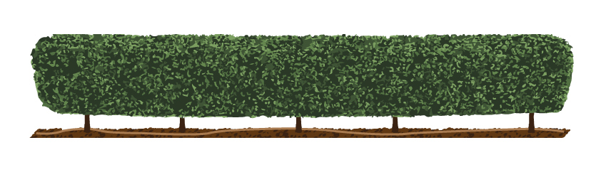 Low-Maintenance-Garden-Hedge-with-line