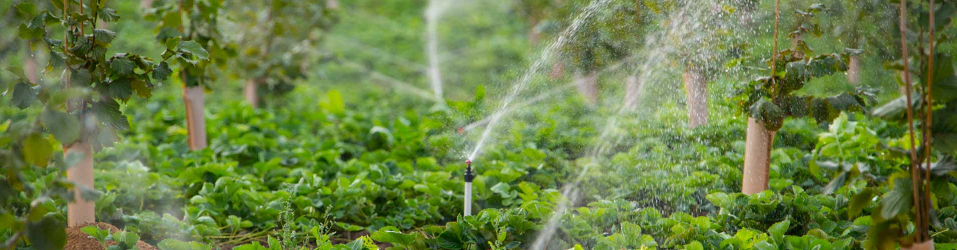 Orchard Sprinklers
